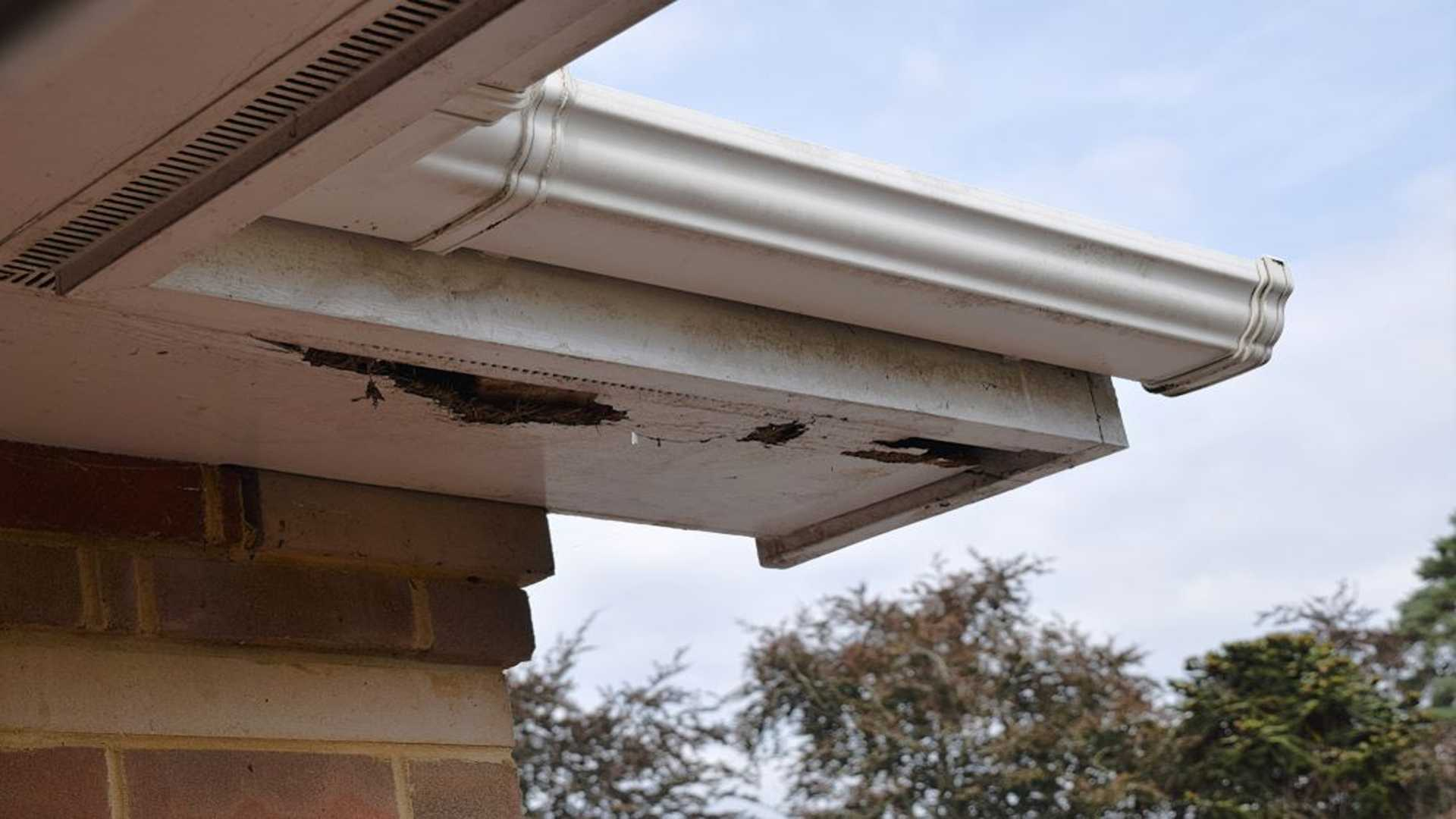 Rotten Wood On Roof Near Gutter Wood Rot Repair Gutter Solutions and Home Improvements Pensacola FL 850 776 1782